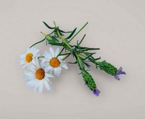 chamomile-lavender-flower